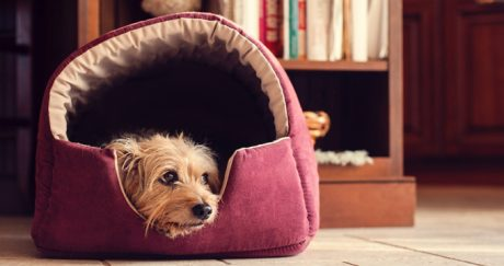 Best Eco-friendly Dog Beds