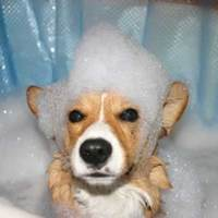 Green dog shampoos