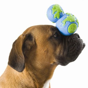Green dog toys