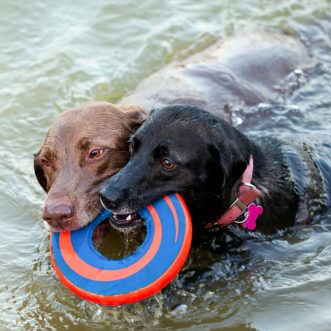 Top 10 dogs that love the water