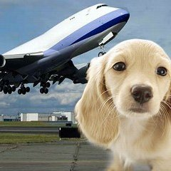 Traveling Abroad with Dogs