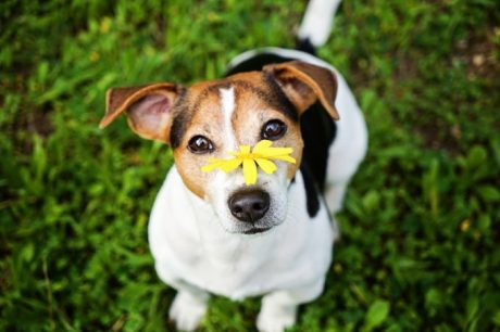 Does Your Dog Suffer From Allergies?