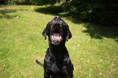 Aggression Toward Dogs