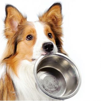 Diet for older dogs
