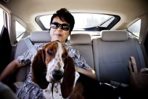 How Can I Help Prevent My Dog From Getting Car Sick?
