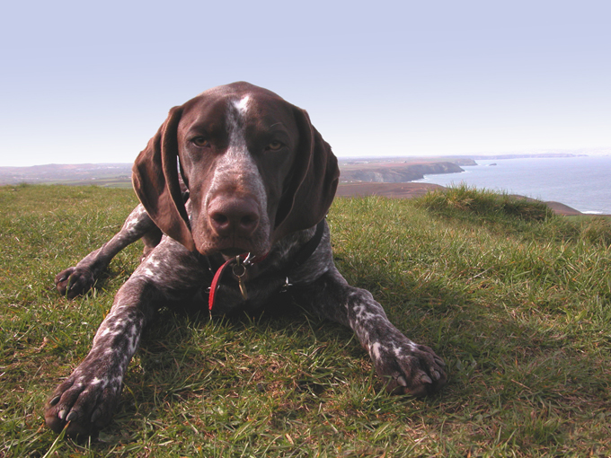 German Shorthaired Pointer Dog Names