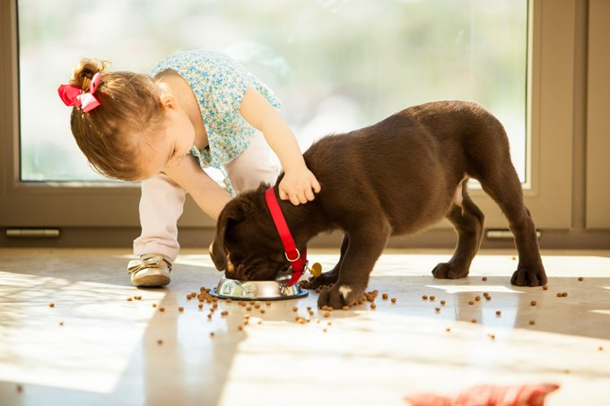 Pets: 10 Human Foods That Are Dangerous for Dogs
