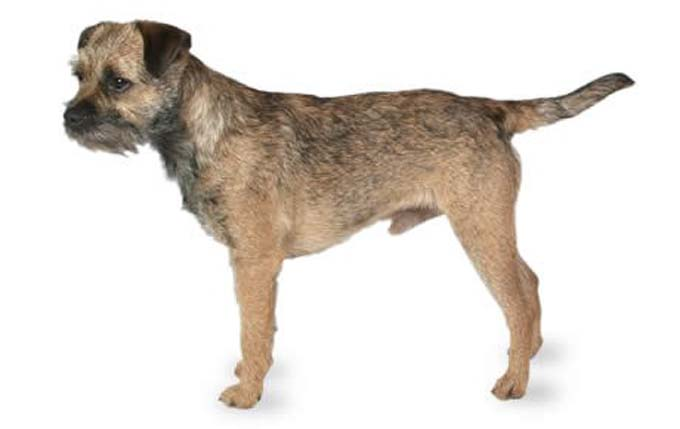 Small Cross Breed Dogs That Dont Malt Uk