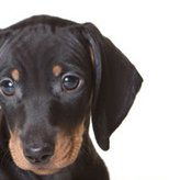 Getting a handle on your pet's epilepsy