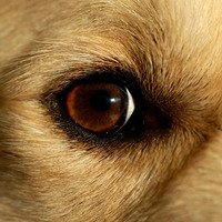 Recognizing and treating dog cataracts