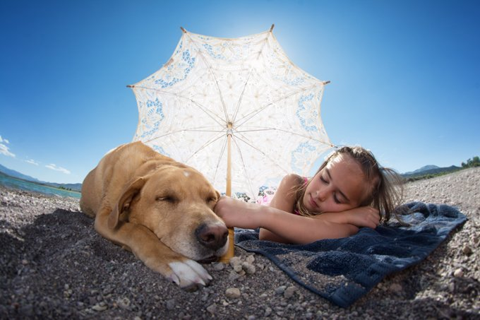 Best Pet Insurance For Dogs In Florida