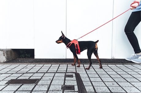Leash Training: Train Your Puppy Or Dog To Walk On A Leash