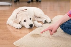 Housetraining your dog