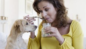 10 Foods That Are Bad For Dogs