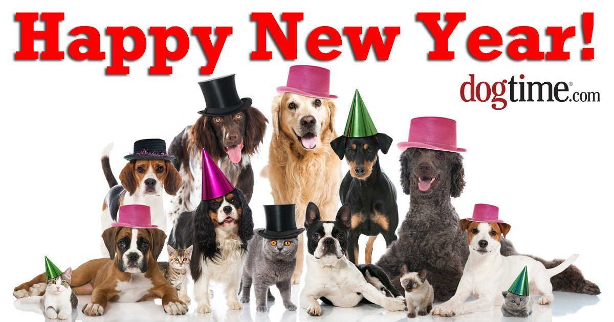 New Years resolutions your dog wishes you'd make - Dogtime