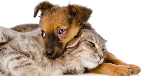 Thinking about fostering an adoptable cat or dog?
