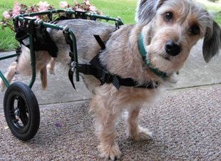 Special needs dogs hit the road