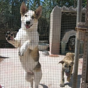 Rescue me! Your pet rescue donation resource