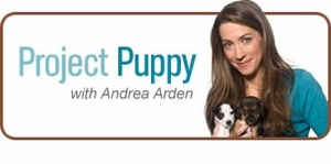 Project Puppy: Take a test drive