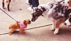DogSpeak: On-leash greeting