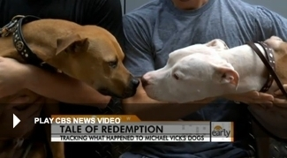 Michael Vick's former dogs on CBS's Early Show