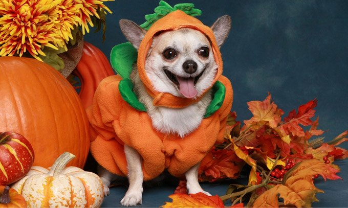 DogSpeak: Halloween And Your Dog - Dogtime