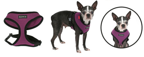 Product Review: Puppia Soft Harness