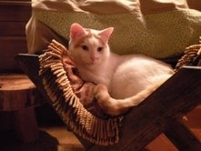 Product Review: Smucci Holiday Manger Pet Bed