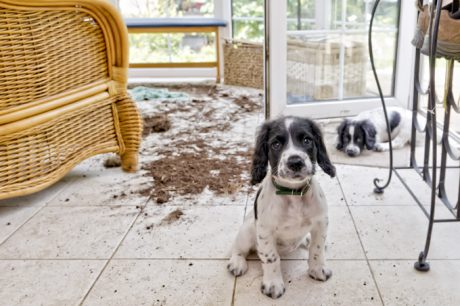 Oxygen VS. Enzyme Cleaners: When To Use What For Households With Pets