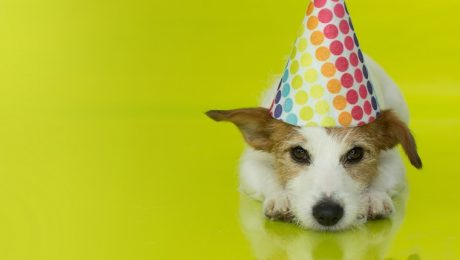 Puppy Shower: A Party To Welcome Your New Family Member