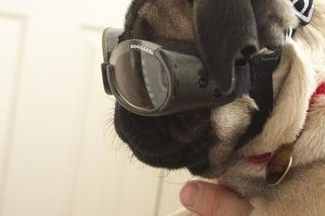 https://www.doggles.com/doggles.html
