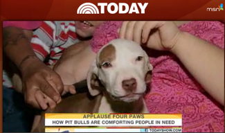 Pit Bulls and the media: hooray!