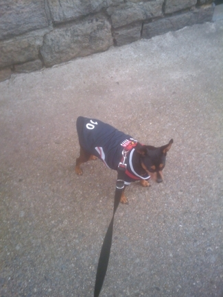 Soccer Dog Jerseys from Little Fanaticos