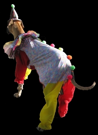 Shake in clown costume (rear view)