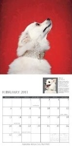 Rescues Rock The Runway Calendar - Gucci