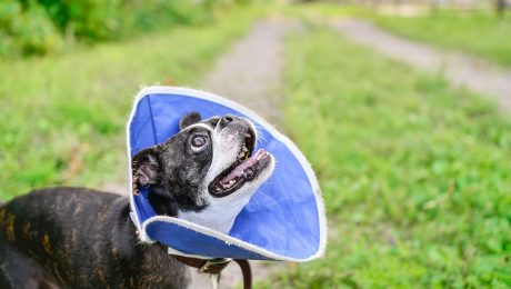 Why Should You Spay Or Neuter Your Dog?