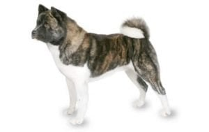 All Dog Breeds Complete List Of Dog Profiles