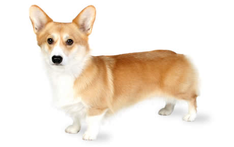 Can Small Dogs And Big Dogs Breed In Sims