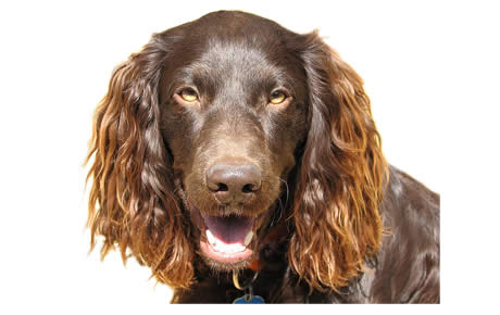 Stop Dog Moulting Hair