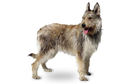 What Is The Oldest You Can Neuter A Dog