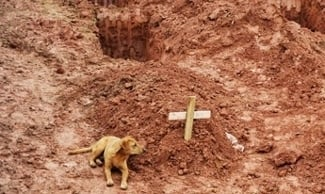 Dog refuses to leave owner's grave