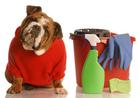 Cleaning Dog Stains and Odors