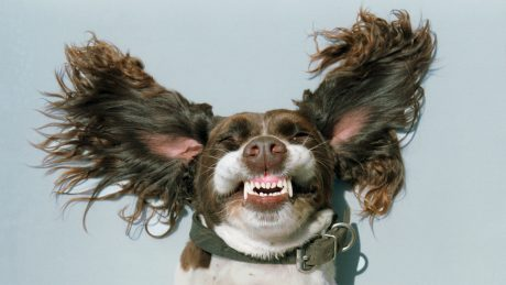 Get The Message: What A Dog's Tail It's Telling You