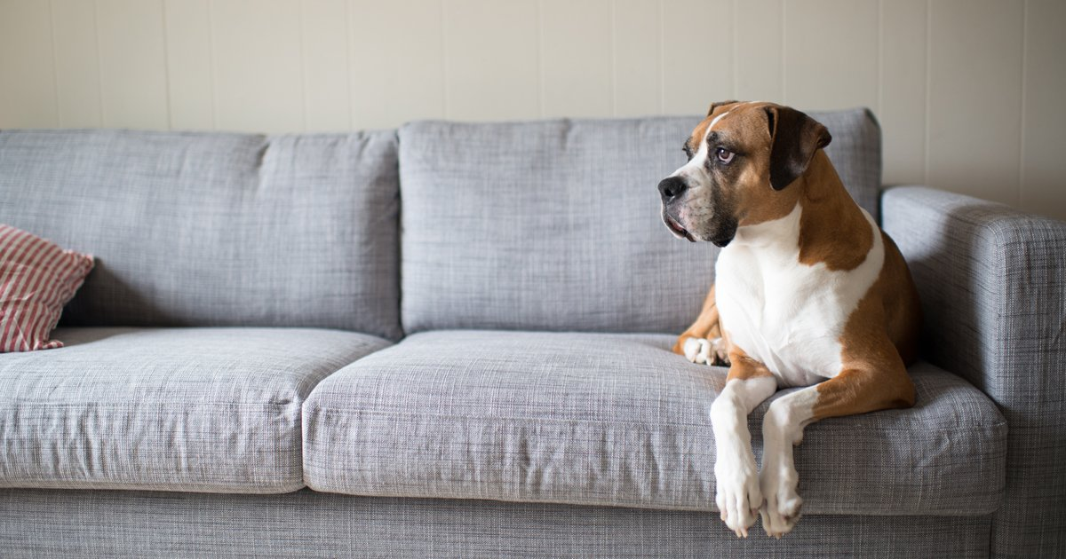 Keep dogs off furniture - Dogtime