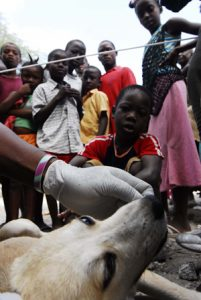 Haiti's Animal Relief Effort, Post-Earthquake