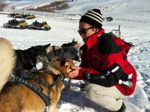 A veterinarian's sled dog experience