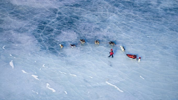 sled dogs on frozen lake