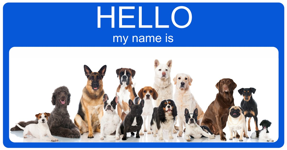 Top 100 Most Popular Male And Female Dog Names