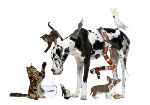 Top 10 most popular pet names of 2011