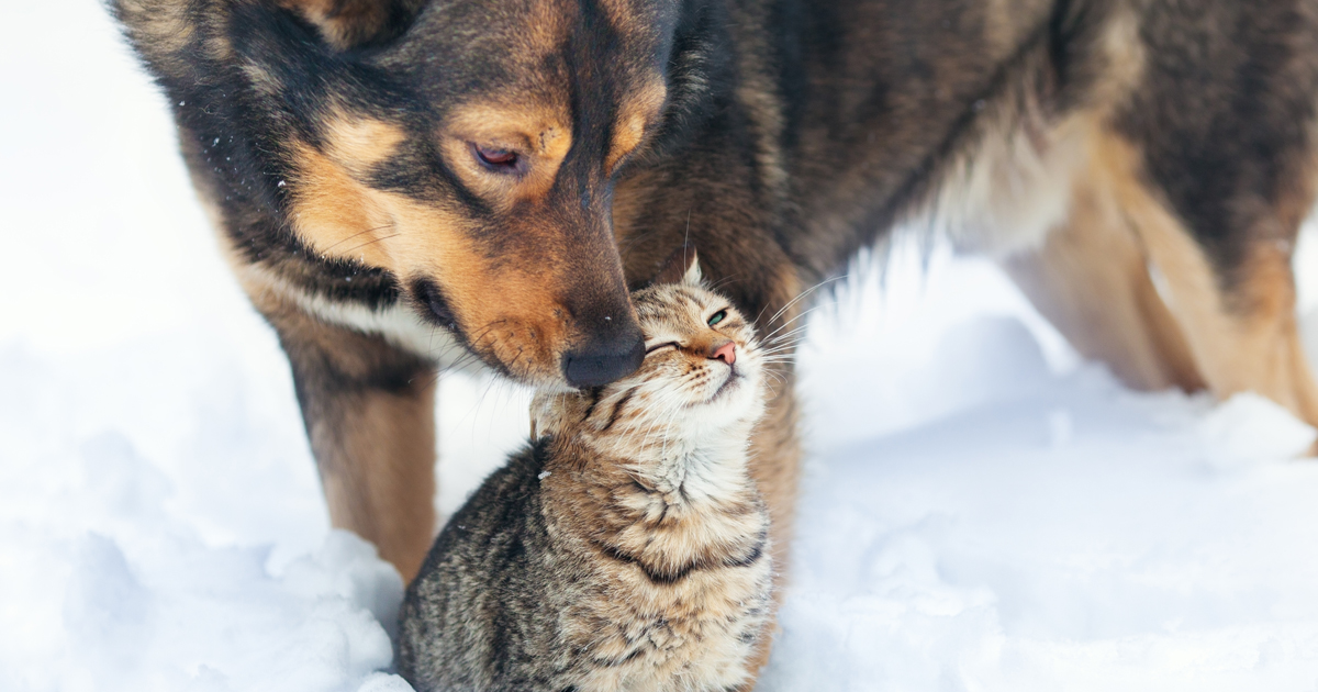 8 Myths About Pets And Winter Care Dogtime